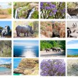 African wild animals collage, fauna diversity in Kruger Park, natural themed collection background, beautiful nature of South Africa, wildlife adventure and travel - Stock Photo