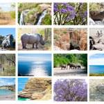 collage di animali selvatici africani, diversità di fauna nel parco kruger, sfondo naturale raccolta a tema, bella natura del Sudafrica, fauna selvatica avventura e viaggi — Foto Stock #18631641