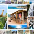 African wild animals collage, fauna diversity in Kruger Park, natural themed collection background, beautiful nature of South Africa, wildlife adventure and travel — Stock Photo