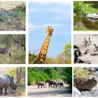 African wild animals collage, fauna diversity in Kruger Park, South Africa - Stock Photo