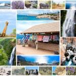 animales salvajes africanos el collage, diversidad de fauna en el parque kruger, fondo colección temática natural, hermosa naturaleza de Sudáfrica, flora y fauna aventura y viajes — Foto de Stock