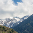 Nature of the fir and green mountains and blue sky in Almaty, Kazakhstan — Stock Photo