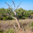 South african landscape in UAR, Kruger's park - Stock Photo