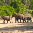 Wild herd of elephants come to drink in Africa in national Kruger Park in UAR,natural themed collection background, beautiful nature of South Africa, wildlife adventure and travel — Stock Photo #25447813