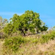 South african landscape in UAR, Kruger's park — Stock Photo