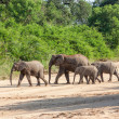 Wild herd of elephants come to drink in Africa in national Kruger Park in UAR,natural themed collection background, beautiful nature of South Africa, wildlife adventure and travel — Stock Photo #25448013