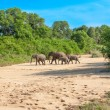 Wild herd of elephants come to drink in Africa in national Kruger Park in UAR,natural themed collection background, beautiful nature of South Africa, wildlife adventure and travel — Stock Photo #25448103