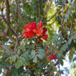 Red flower on tree in park. Cape Town, South Africa - Stock Photo