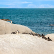 Penguins at the beach of Atlantic ocean in South Africa,Cape Town — Stock Photo