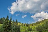 Naturaleza de árboles verdes y cielo azul, cerca de medeo en almaty, kazajstán, asia en verano — Foto de Stock