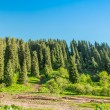 Nature:  green trees and blue sky in Chimbulak Almaty,  Kazakhstan — Stock Photo