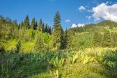 Natur von grünen Bäumen und blauen Himmel, in der Nähe von Medeo in Almaty, Kasachstan, Asien im Sommer — Stockfoto