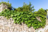 Big tree in Small cretan village in Crete island, Greece — Stock Photo