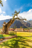 Tree in South America,PERU — Stock Photo