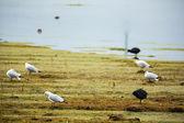 Aquatic seabirds in lake — Stock Photo