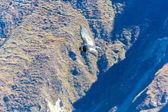 Flying condor — Stock Photo