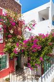 Bougainvilliers fleurs — Photo
