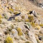 ������, ������: Flying condor
