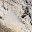 Stock Photo: Condor over Colccanyon