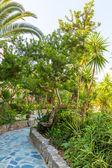 Bitkilerde kavros köyü — Stok fotoğraf