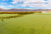 Lake Titicaca — Stock Photo