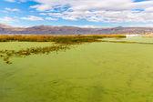 Lake Titicaca — Stock Photo