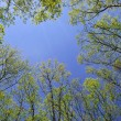 Tree Branches against Blue Sky — Stock Photo