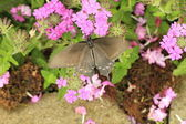 Beautiful butterfly on a flower — Stock Photo