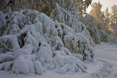 Branches of trees, covered with a thick layer of snow — Stock Photo