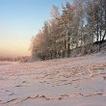 sníh a stromy ve světle zapadajícího slunce — Stock fotografie #19646629