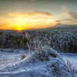 Sunrise in the Siberian taiga — Stock Photo