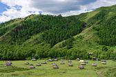 Campamento nómada — Foto de Stock