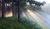 The rays of the sun in the mist — Stock Photo