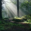 Stock Photo: Morning in the deep forest