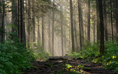 Morning in the deep forest — Stock Photo