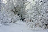 树树枝和霜 — 图库照片