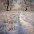Grass and trees covered with snow — Stock Photo