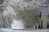 Arch of snowy trees — Stockfoto