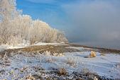 O capim coberto de neve e árvores na margem do rio — Foto Stock