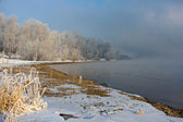 The snow-covered grass and trees on the river bank — Stock Photo