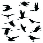 Silhouettes birds.Vector illustration — Stock Vector