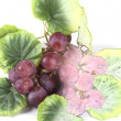 Fruit composition of colored drawing of grapes - Stock Photo