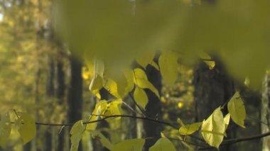 Feuilles de l'automne et l'allée du parc — Vidéo