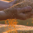 Close-up of agriculture bread harvest (mixed-other - day) — Stock Video