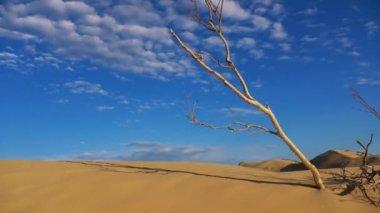 Desert Time Lapse — Stock Video