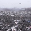 Medium shot of garbage dump rubbish dumping (static - day) — Stock Video #12599078