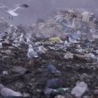 Medium shot of garbage dump rubbish dumping (static - day) — Stock Video #12599086