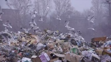 Medium shot of garbage dump rubbish dumping (static - day) — Stock Video