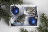 Christmas gift, two small bird — Stock Photo