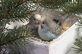 Christmas gift, two small bird — Stok fotoğraf